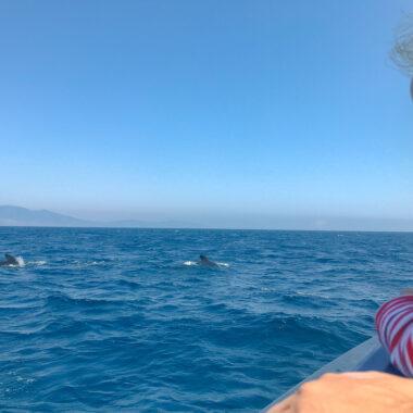 voir les baleines à tarifa Andalousie