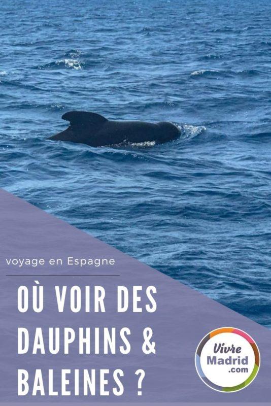 où voir les baleines en Espagne