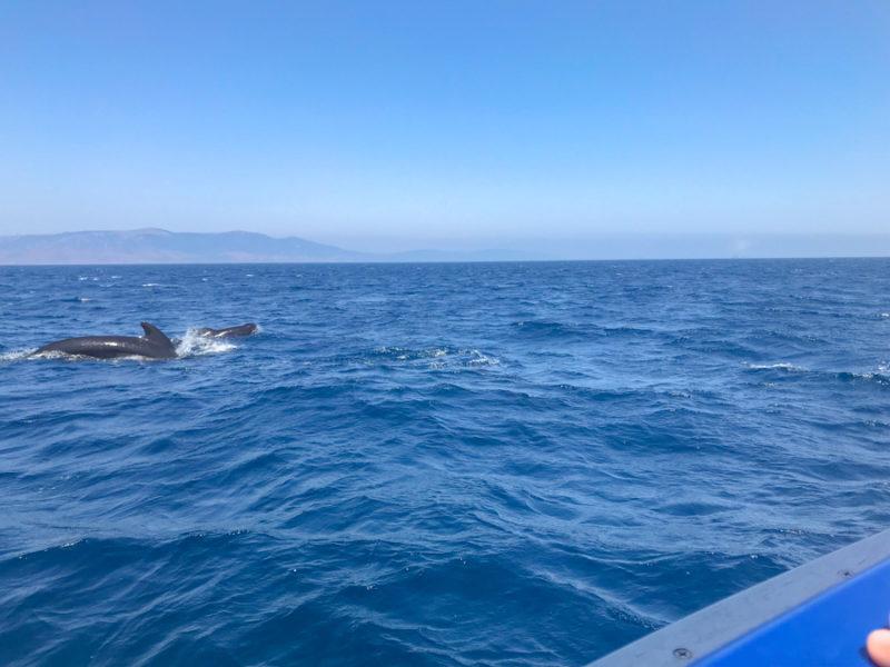 où voir des baleines en espagne