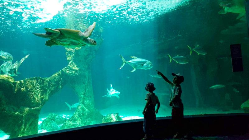 zoo aquarium madrid avec les enfants