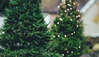 trouver son sapin de Noël à Madrid